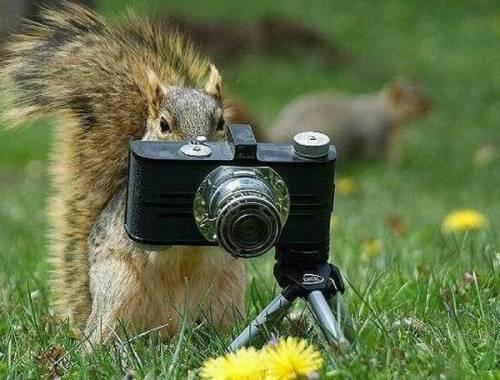 animal_camera