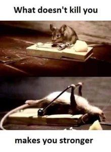 funny-rat